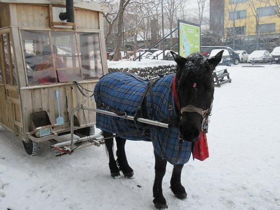 Misawa, Japonya: ストーブ馬車の馬