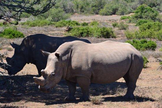 Port Elizabeth, Sudáfrica: Survived a poacher attack!