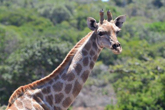 Port Elizabeth, Zuid-Afrika: What a thrill!