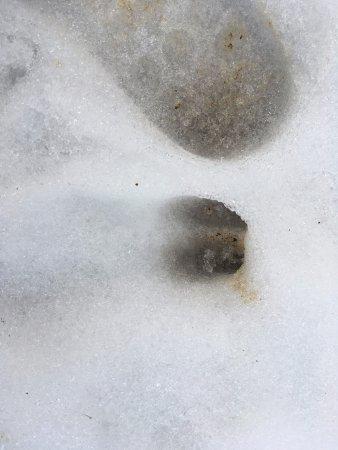 Lurisia, Italy: Impronte di caprioli