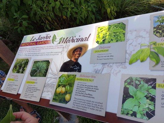 Trois-Ilets, Martinica: Panneau sur les plantes