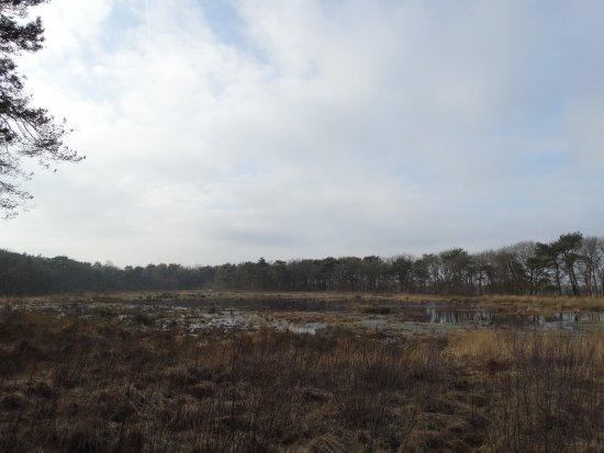 Ruinen, Holandia: Dwingelderveld