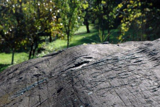 Capo di Ponte, Italia: Parco Seradina-Bedolina: roccia n. 26 particolare
