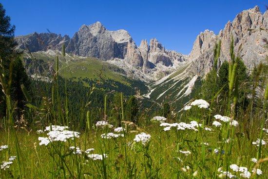Paesaggi Estivi Val Di Fassa Lago Di San Pellegrino E Col Margherita