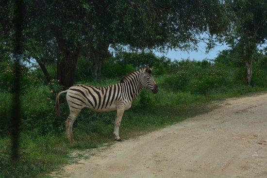 Hambantota, Sri Lanka: Zeebra