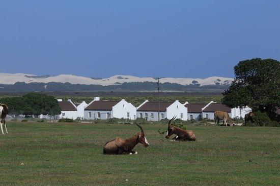 Bredasdorp, Afrika Selatan: photo2.jpg