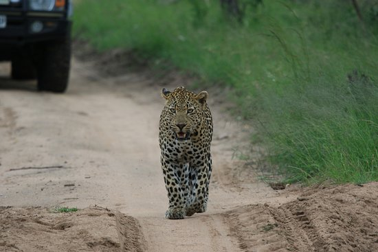 Ulusaba Safari Lodge照片