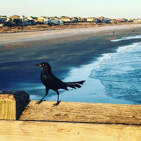 Folly Beach, Carolina Selatan: photo2.jpg