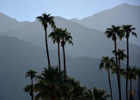 Bilde fra The Saguaro Palm Springs