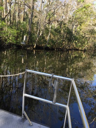 Homosassa Springs, FL: Typical view from our boat