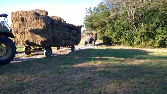 Rancho Curubande' Lodge: Baled hay coming in from the fields.
