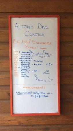 Utila, ฮอนดูรัส: encounter board