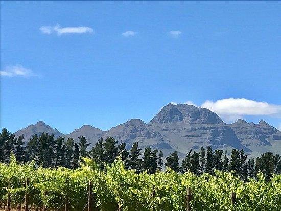 Majeka House: Vriesenhof vineyard