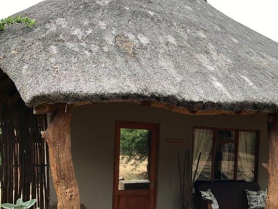 Bilde fra Kambaku Safari Lodge