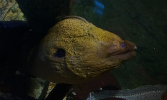 Weird Fish Picture Of Underwater World Tumon Tripadvisor