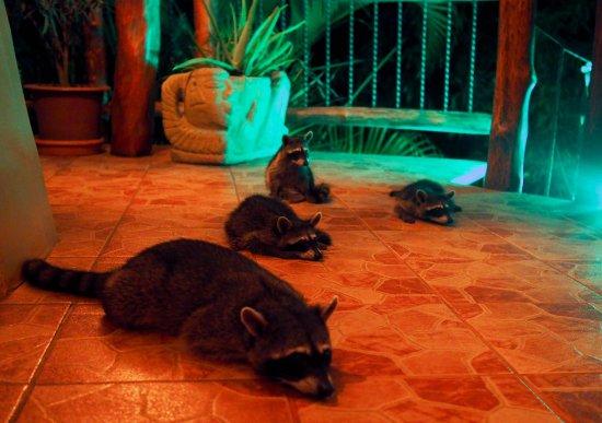 Villa Mango: Les visiteurs du souper...