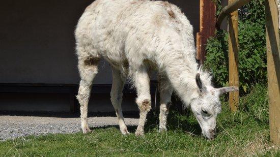 Les Houches, Francia: animal