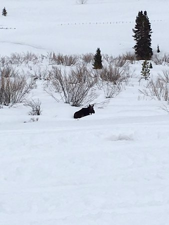 Snowmobile Adventures at Thousand Peaks: Hello Mr. Moose!