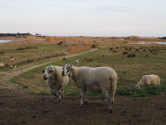 El Prat de Llobregat, España: Vista del hide de Cal Tet