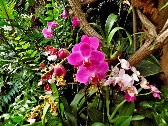 Arona, Spanien: Orchidarium