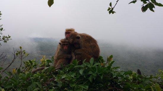 Tangalle, Sri Lanka: ook aapjes worden niet graag nat ;)