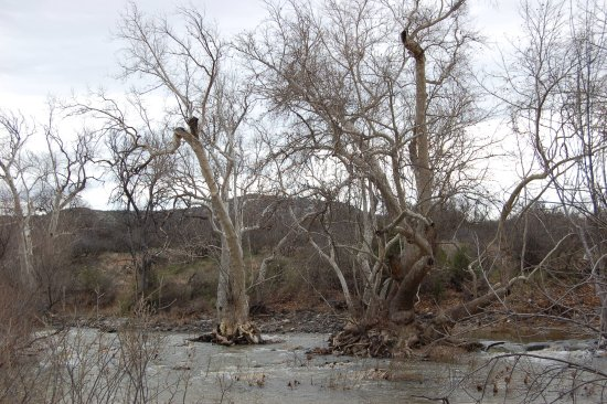 Camp Verde, AZ: The stream can be full in the springtime