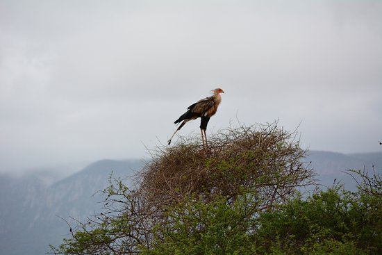 Pongola, جنوب أفريقيا: bird life