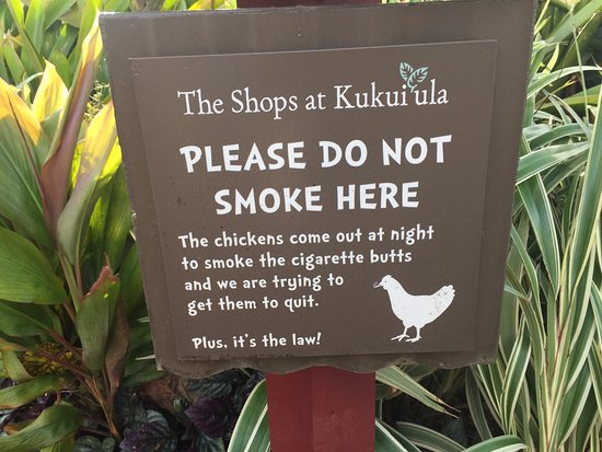 Kuhio Shores Condos Picture