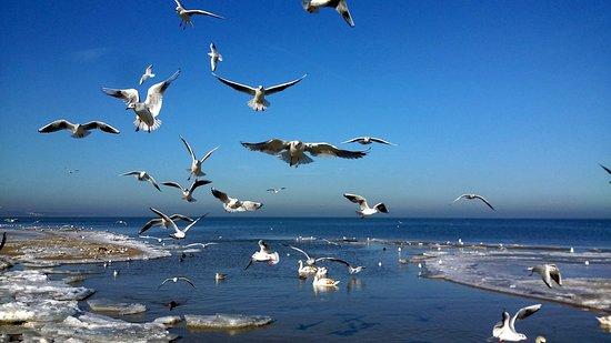 Mellenthin, Tyskland: Vogelflug