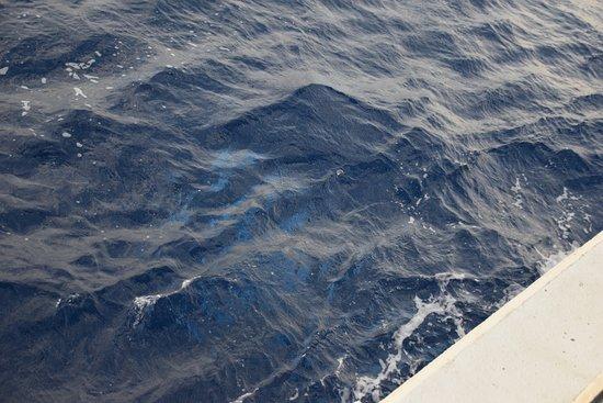 Maalaea, HI: Whale under the boat