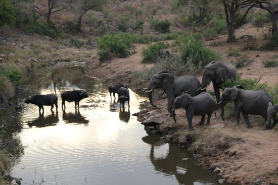Lukimbi Safari Lodge-billede