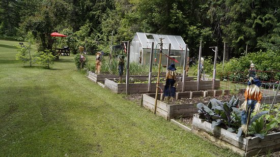 Salmon Arm, Canadá: Veggie garden for fresh produce