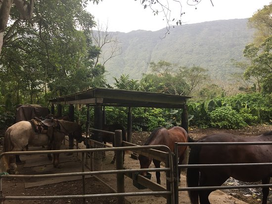 Honokaa, Havaí: Stable - horses well cared for (notice weight and rubber mat)