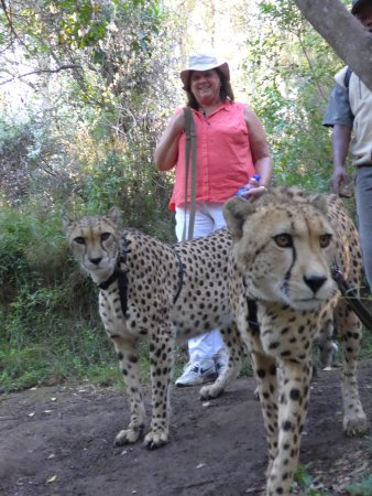 The Crags, Republika Południowej Afryki: A gentle walk with a couple of cheetahs!