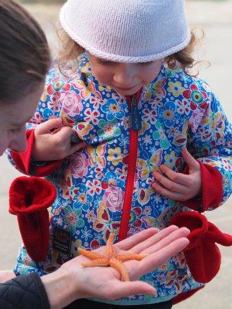 Lyme Regis, UK: Holding a starfish
