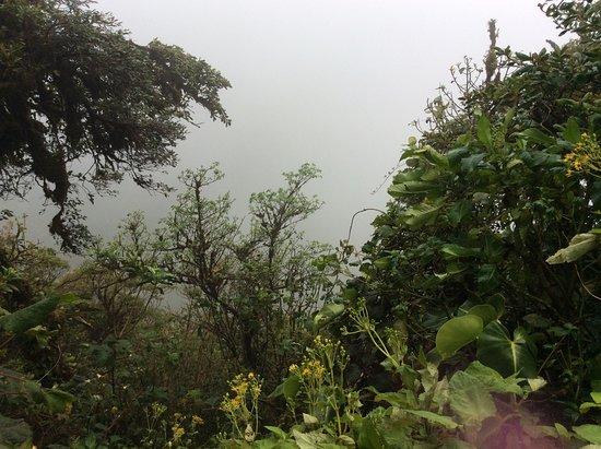 Reserva Bosque Nuboso Santa Elena: Sembra di stare immersi in una nuvola