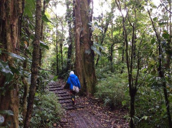 Reserva Bosque Nuboso Santa Elena: Passeggiata sotto la pioggia
