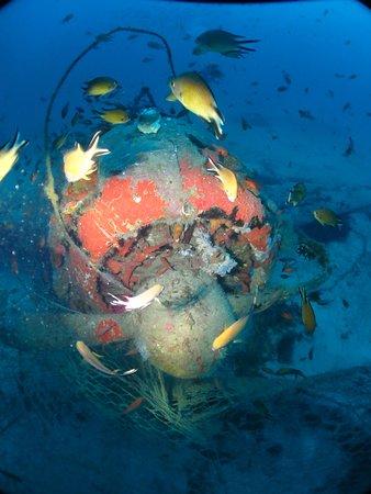 Blue Explorers: plenty of marine life