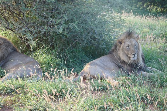 Madikwe Game Reserve, South Africa: Game Drive