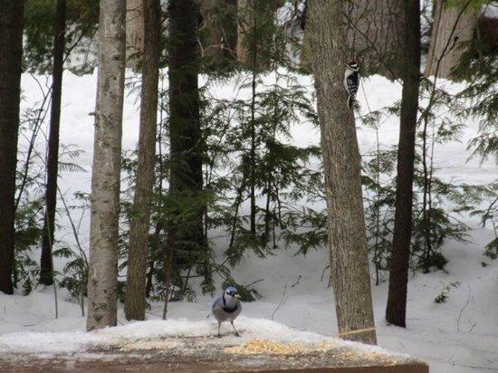 Port Elgin, Kanada: February 2017 winter yurt camping