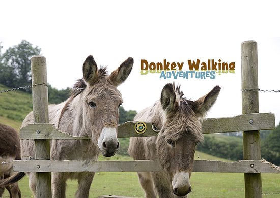 ‪Donkey Walking Adventures‬