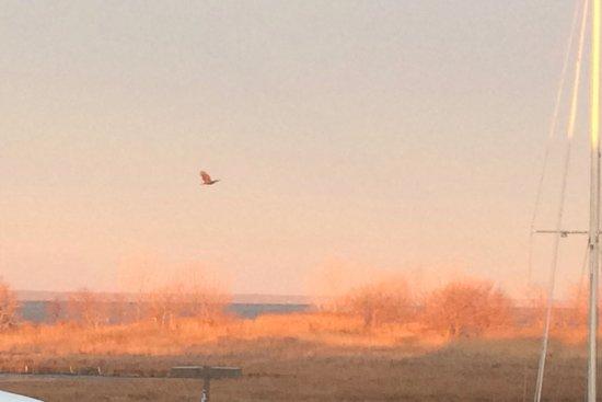 Tilghman, MD: Sunrise