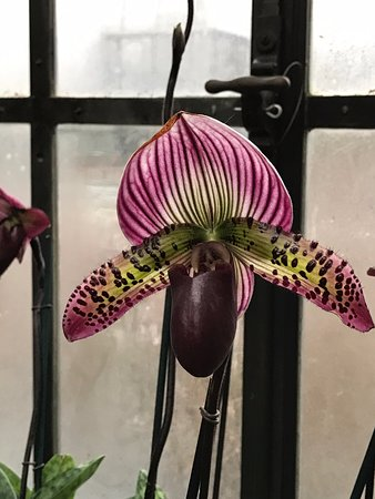 Kennett Square, PA: Beautiful Orchid