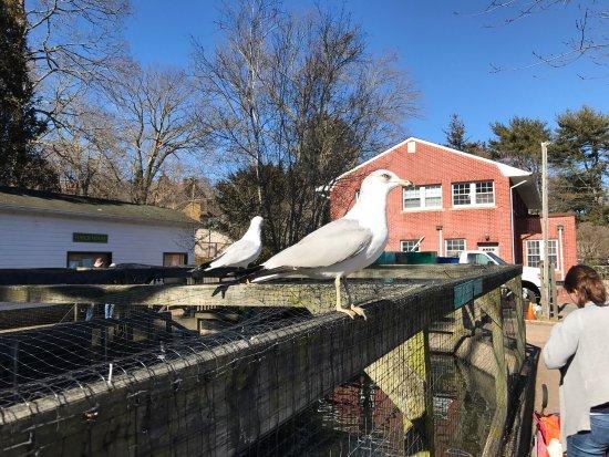 Cold Spring Harbor, NY: photo3.jpg