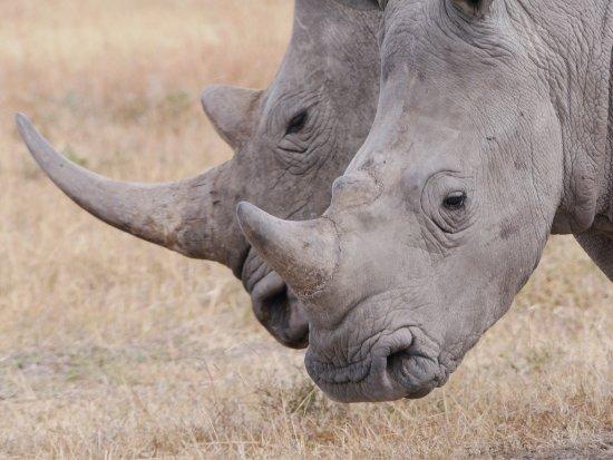Porini Rhino Camp: photo0.jpg