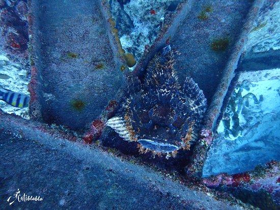 Gili Air, Indonesia: poisson pierre