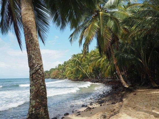 Isla Bastimentos, Panama: Ein wunderschönes Eco-Hotel auf Bastimentos