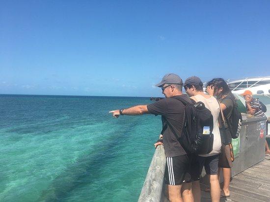Heron Island, Australia: photo4.jpg