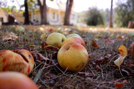 Newberg, OR: Apples
