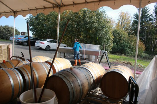 Newberg, OR: Wine Maker Working